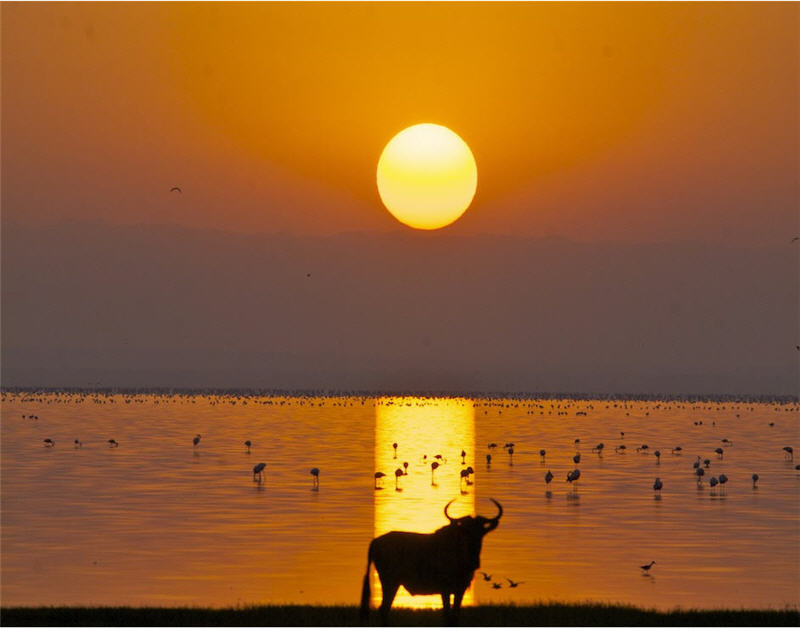 sunrise at lake manyara - 800
